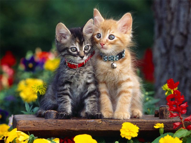 صور قطط حلوة وجميلة بسس جميلة روعة (22)