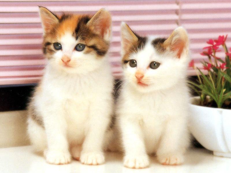 صور قطط حلوة وجميلة بسس جميلة روعة (23)