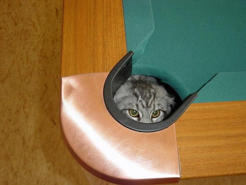 صور قطط حلوة وجميلة بسس جميلة روعة (24)
