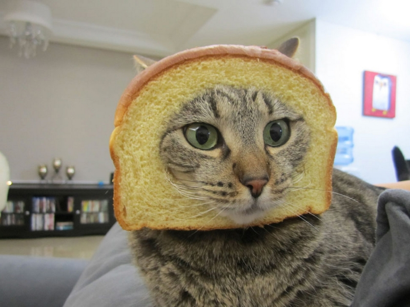صور قطط حلوة وجميلة بسس جميلة روعة (3)