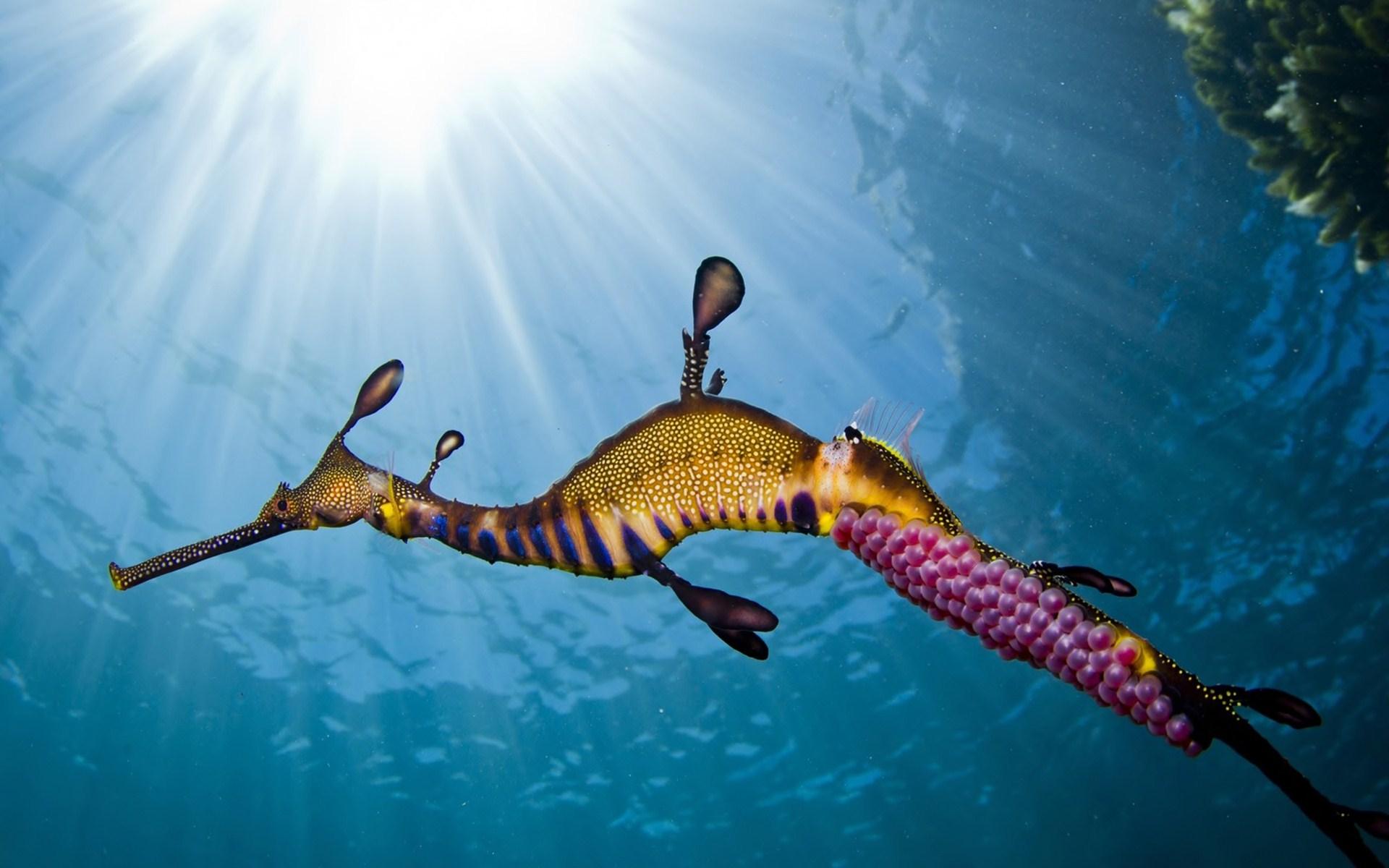 خلفيات وصور بحار احلي صور عن البحر hd (12)