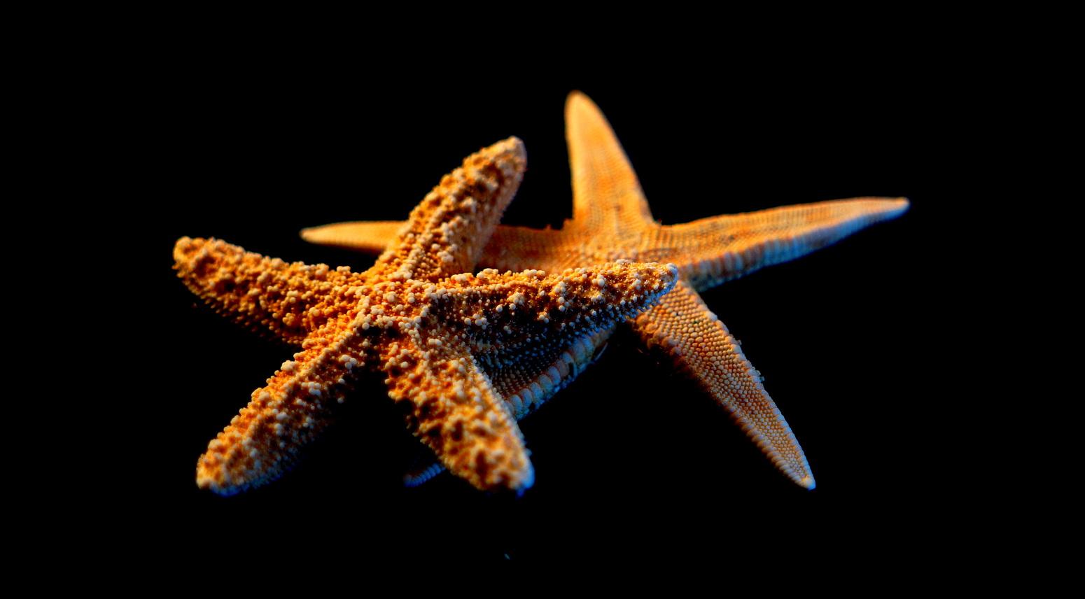 خلفيات وصور بحار احلي صور عن البحر hd (6)