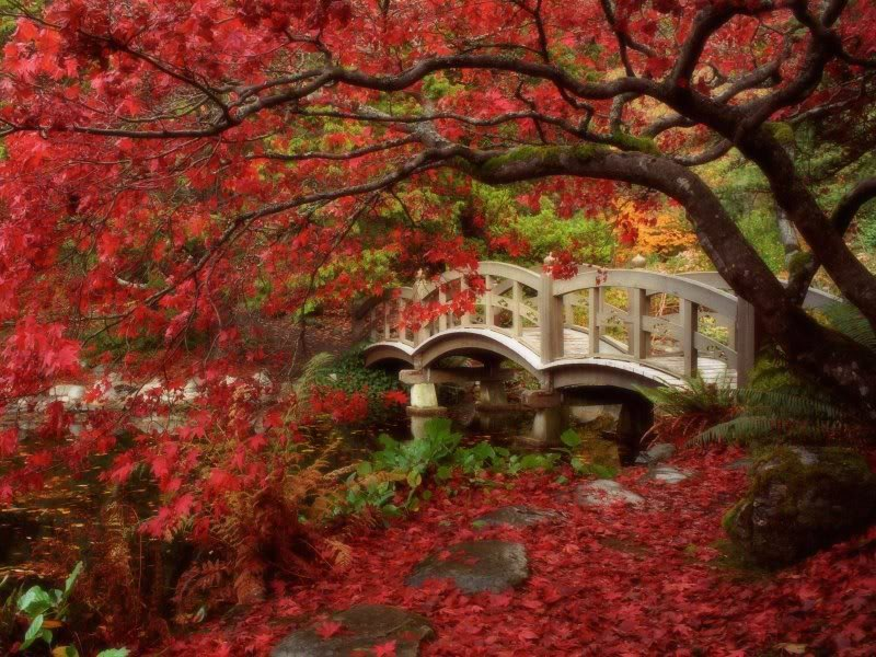 صور حدائق فلل وقصور اجمل مناظر حدائق (31)
