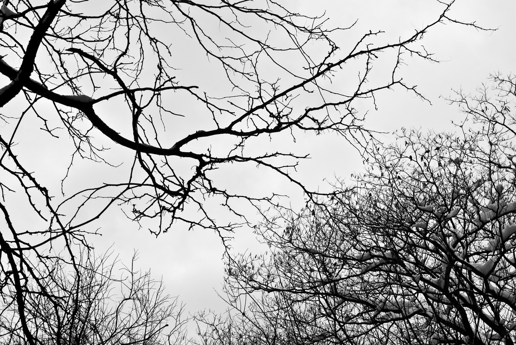 Branches, Black-and-White
