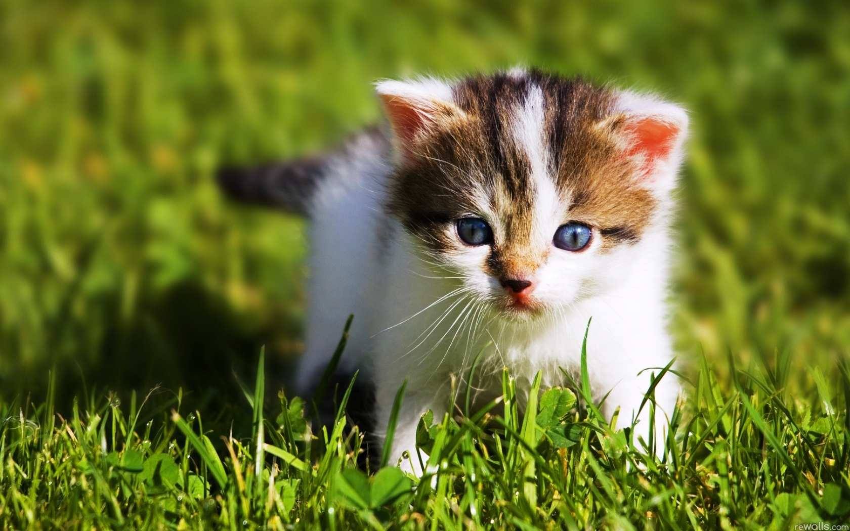 2017 hd - Cute kittens hd images ...