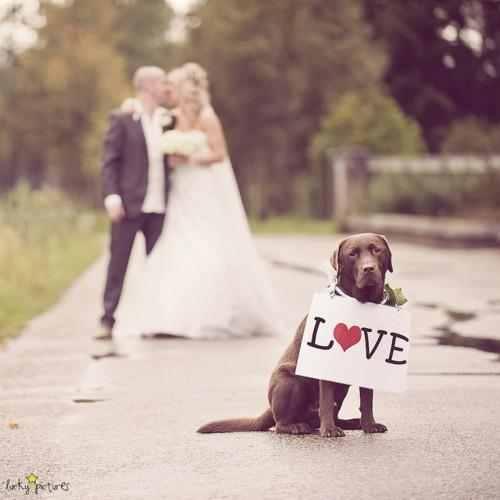 صور حب ورومانسية وعشق صور للمخطوبين والمتزوجين والمرتبطين بالحب (19)