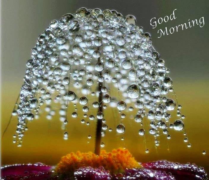 صور صباح الخير وصور للصباح (1)
