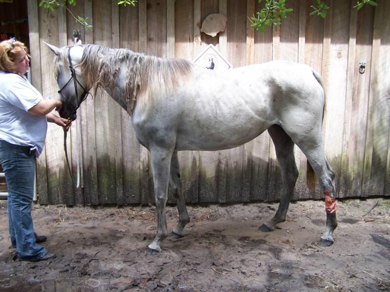 صور خلفيات خيول عربية اصيلة صور احصنة عربية اصيلة بجودة HD (10)