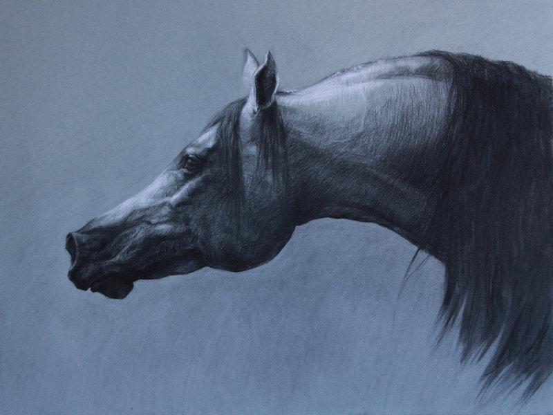 صور خلفيات خيول عربية اصيلة صور احصنة عربية اصيلة بجودة HD (17)