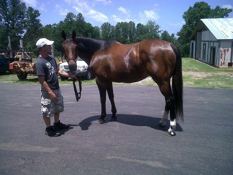 صور خلفيات خيول عربية اصيلة صور احصنة عربية اصيلة بجودة HD (2)