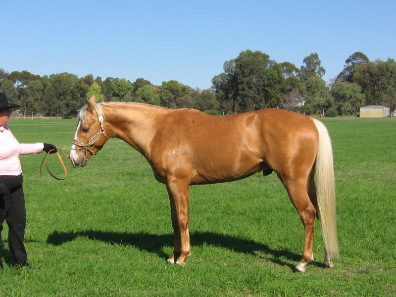 صور خلفيات خيول عربية اصيلة صور احصنة عربية اصيلة بجودة HD (24)