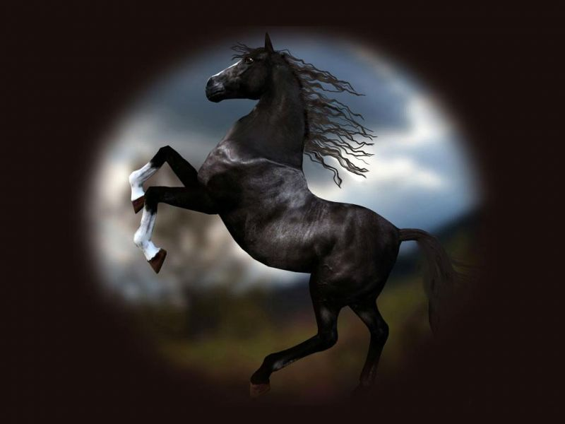 صور خلفيات خيول عربية اصيلة صور احصنة عربية اصيلة بجودة HD (25)