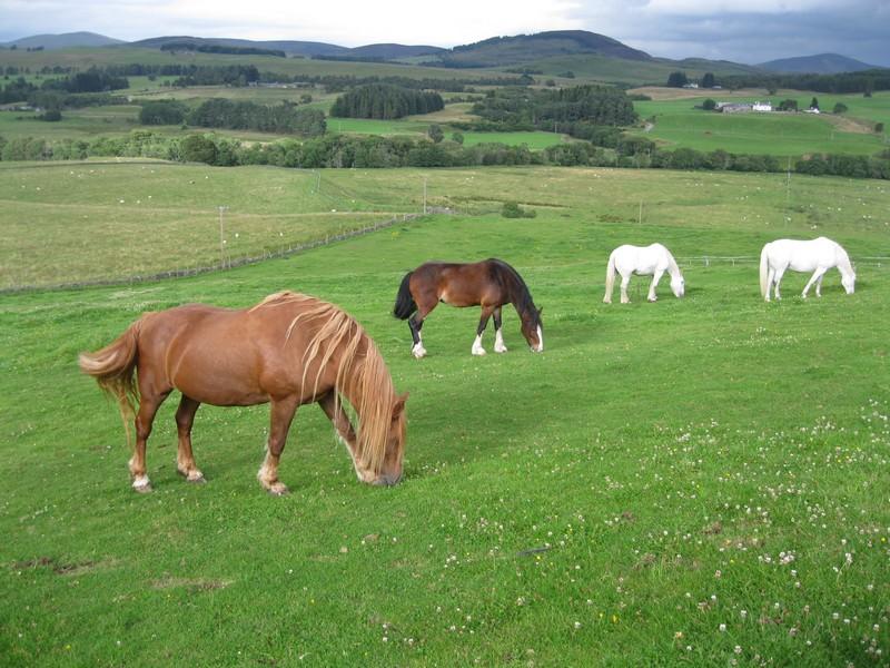 صور خلفيات خيول عربية اصيلة صور احصنة عربية اصيلة بجودة HD (37)