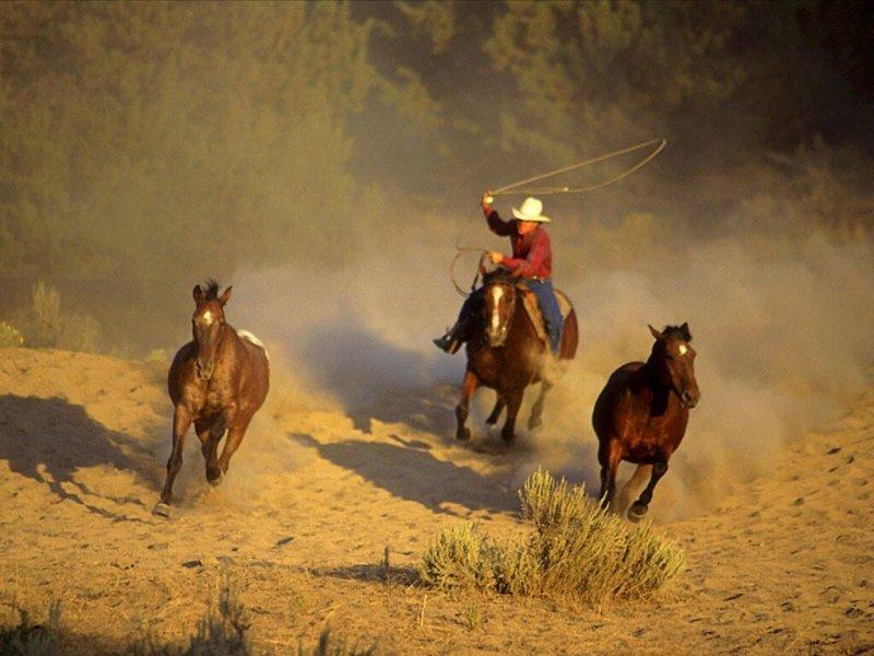 صور خلفيات خيول عربية اصيلة صور احصنة عربية اصيلة بجودة HD (38)