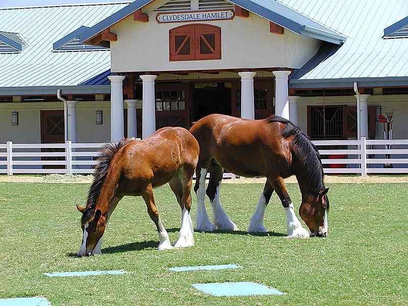 صور خلفيات خيول عربية اصيلة صور احصنة عربية اصيلة بجودة HD (5)