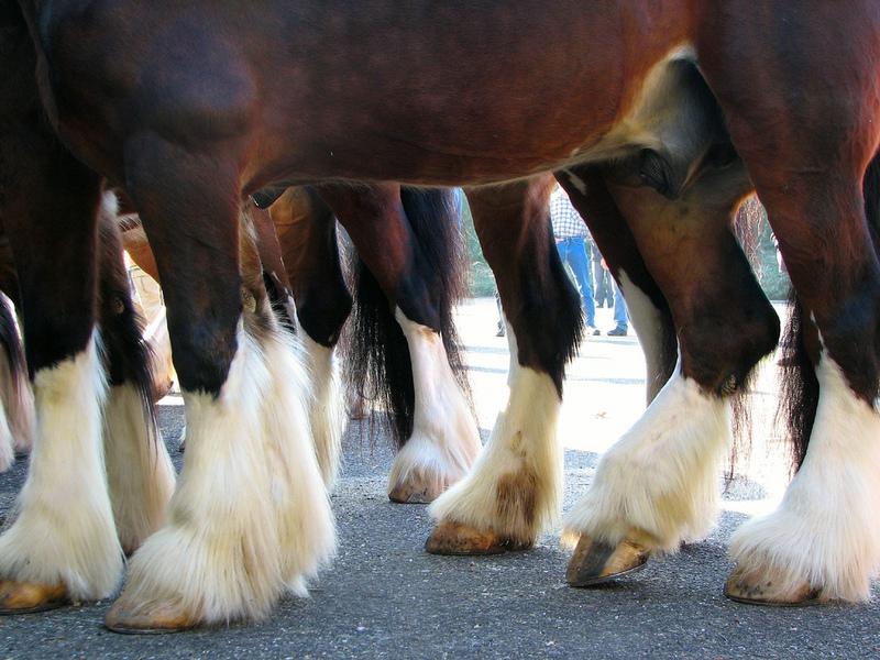 صور خلفيات خيول عربية اصيلة صور احصنة عربية اصيلة بجودة HD (6)