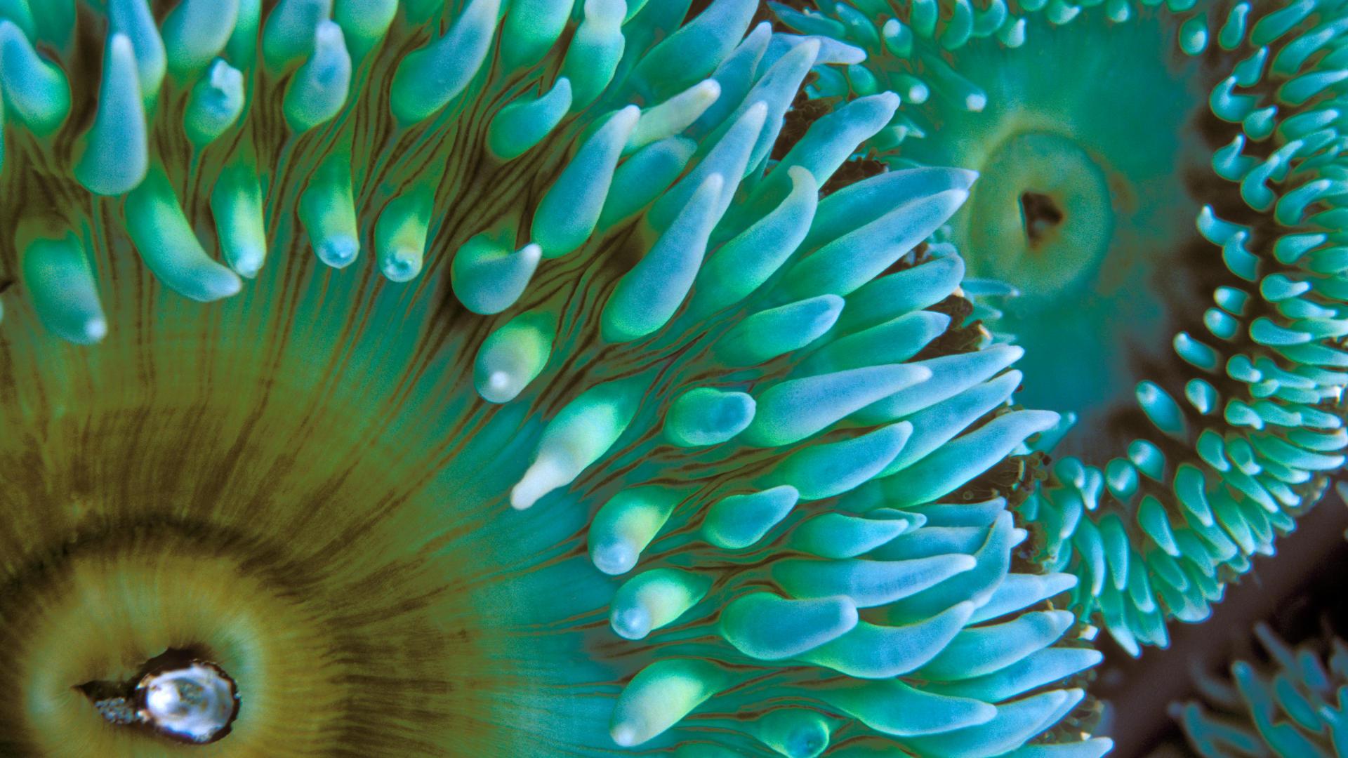 صور بحر خلفيات البحار والمياة بجودة HD (40)