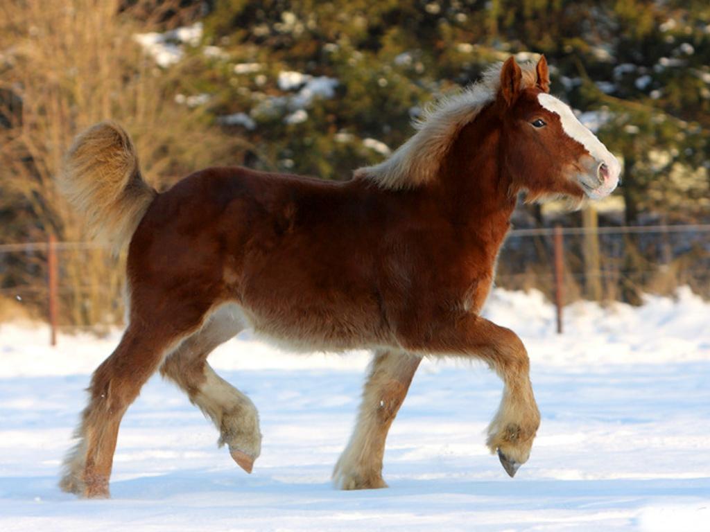 صور حصان HD خلفيات حصان جديدة بجودة عالية (1)