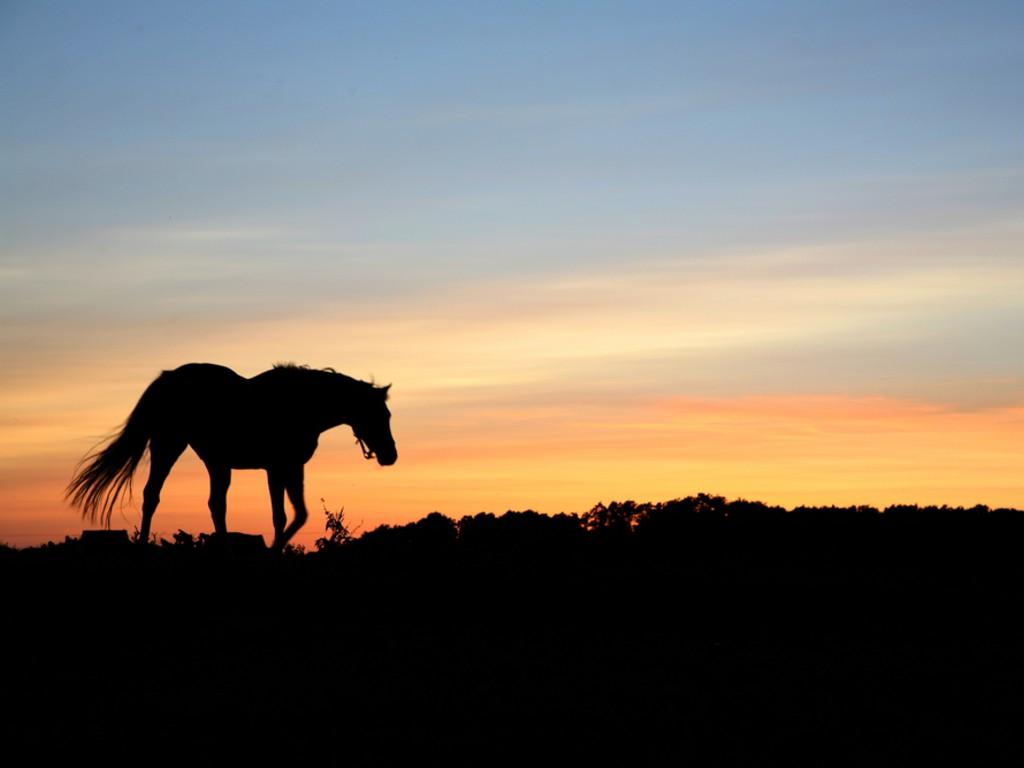 صور حصان HD خلفيات حصان جديدة بجودة عالية (16)