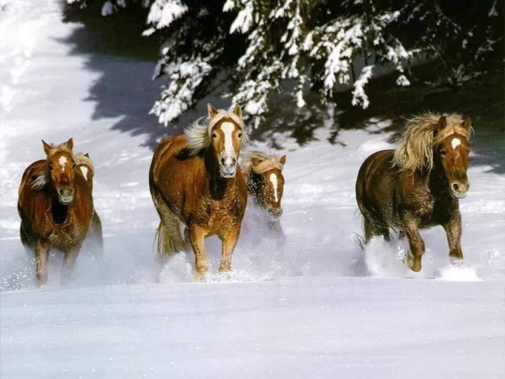 صور حصان HD خلفيات حصان جديدة بجودة عالية (18)