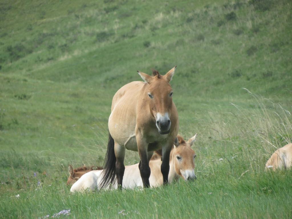 صور حصان HD خلفيات حصان جديدة بجودة عالية (2)