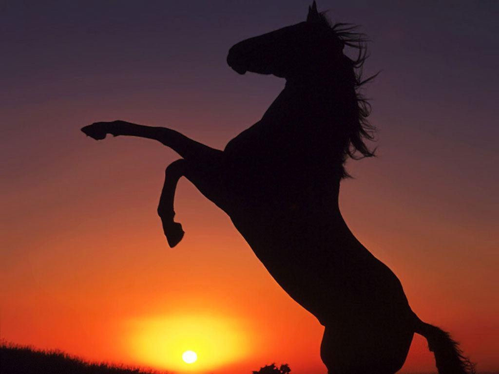 صور حصان HD خلفيات حصان جديدة بجودة عالية (20)