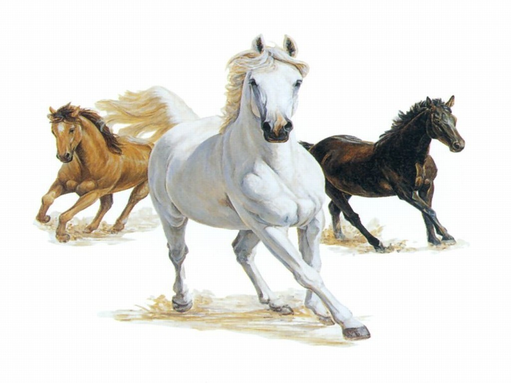 Paint Horse Brown White And Black