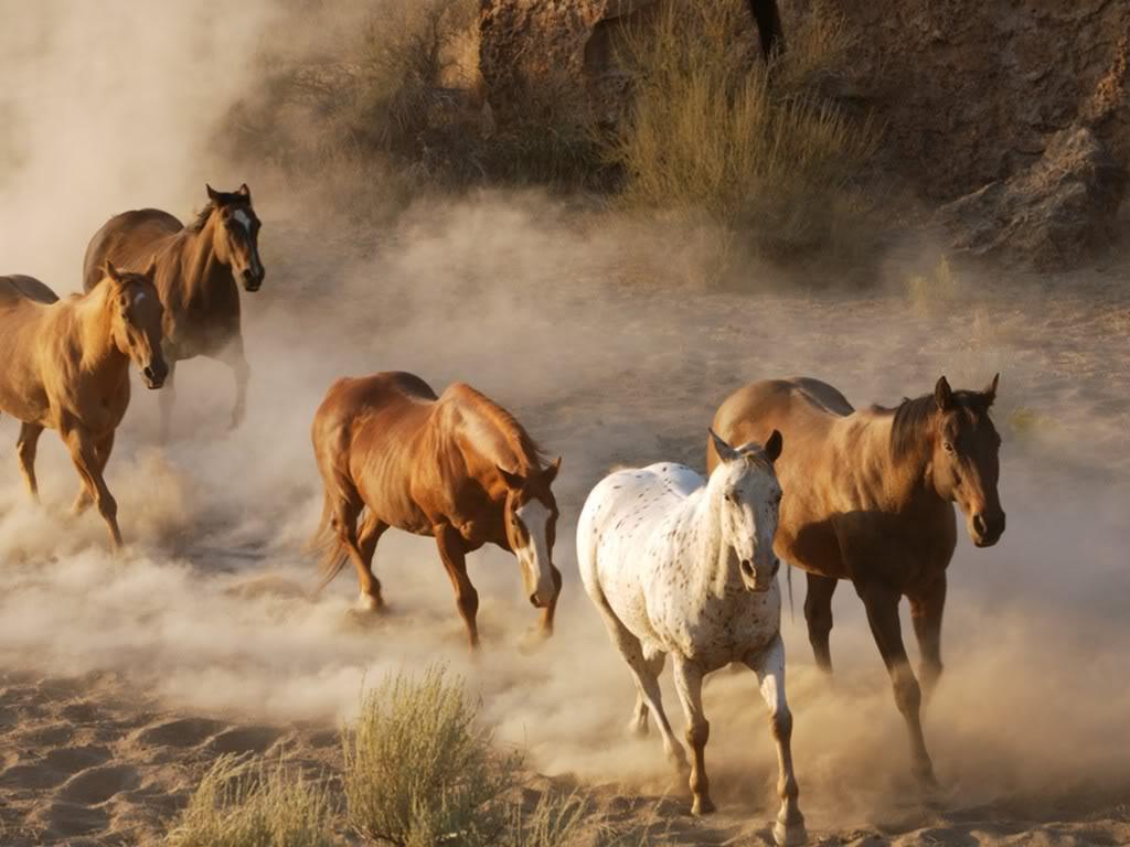 صور حصان HD خلفيات حصان جديدة بجودة عالية (31)