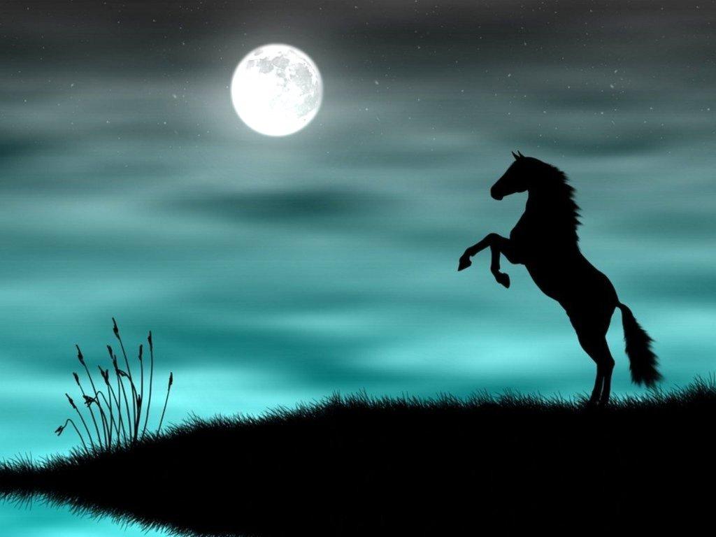 صور حصان Hd خلفيات حصان جديدة بجودة عالية سوبر كايرو