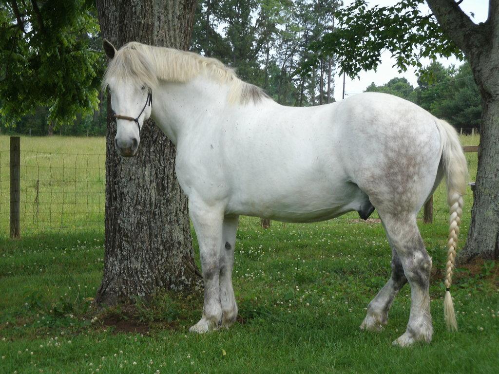 صور حصان HD خلفيات حصان جديدة بجودة عالية (36)