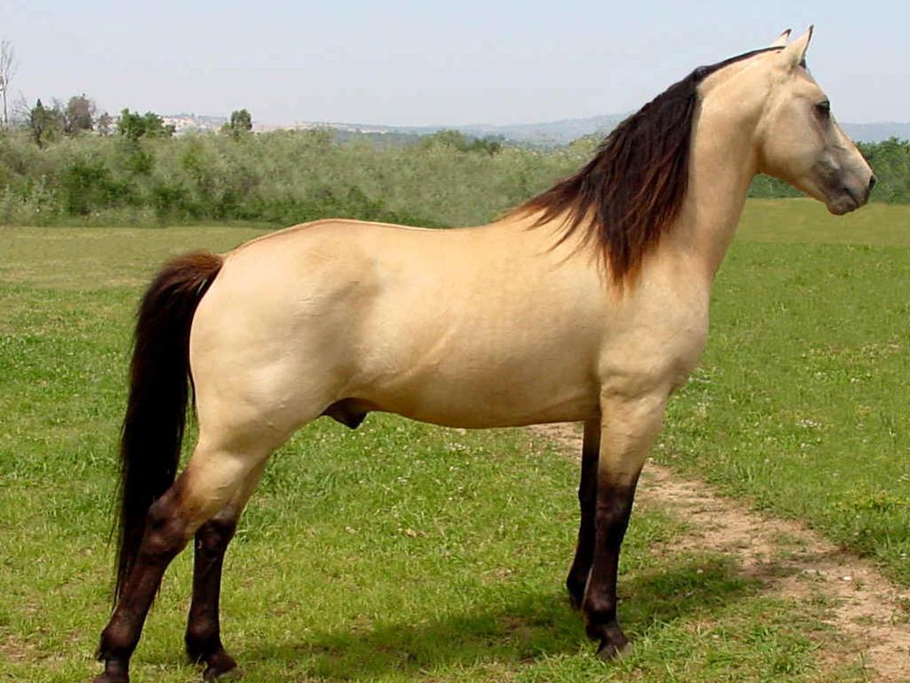 صور حصان HD خلفيات حصان جديدة بجودة عالية (4)
