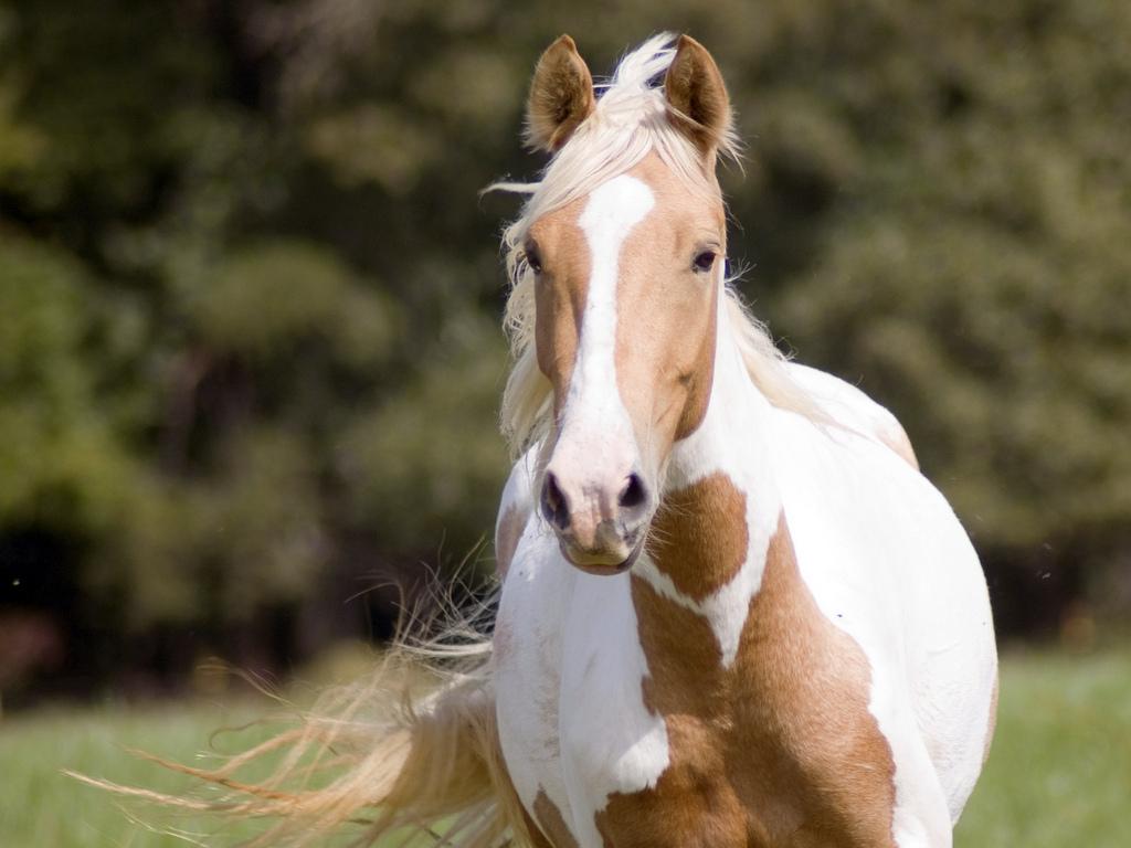 صور حصان HD خلفيات حصان جديدة بجودة عالية (6)