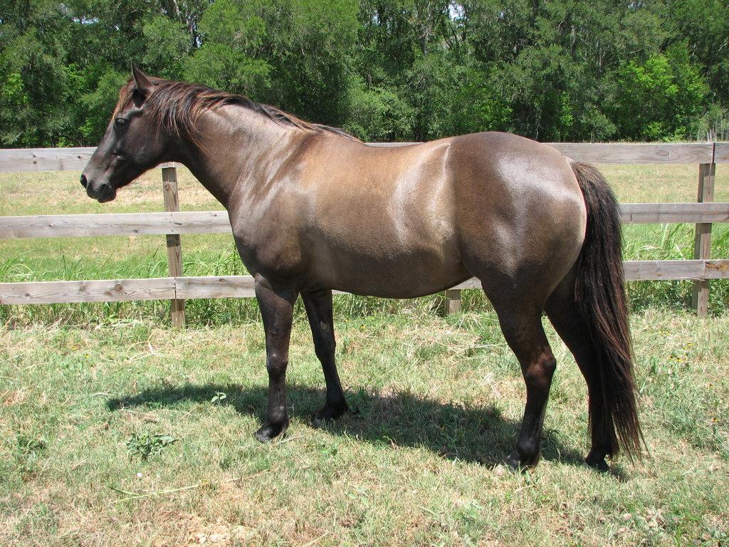 صور حصان HD خلفيات حصان جديدة بجودة عالية (7)