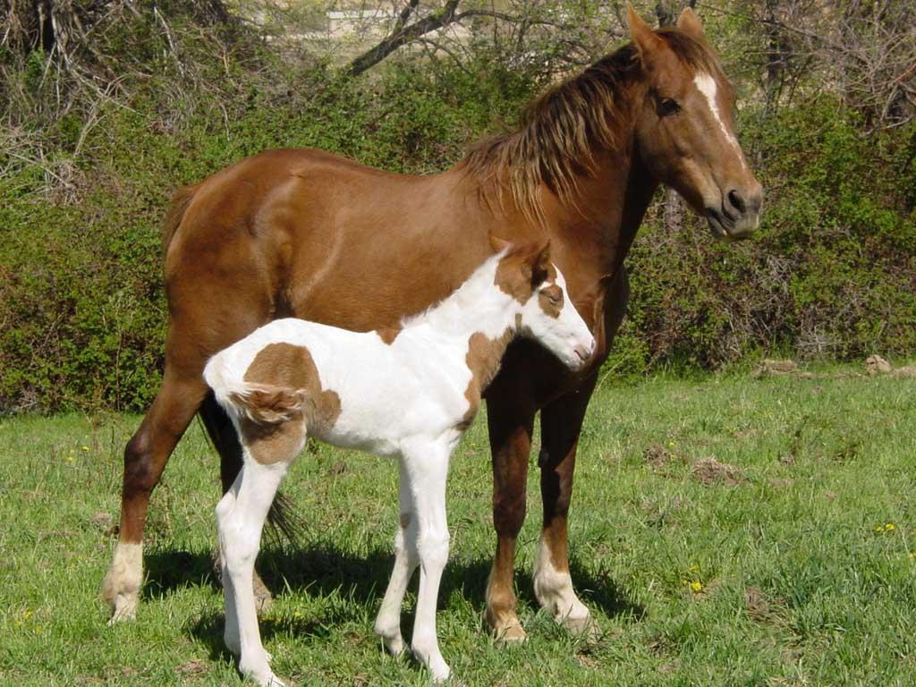 صور حصان HD خلفيات حصان جديدة بجودة عالية (8)