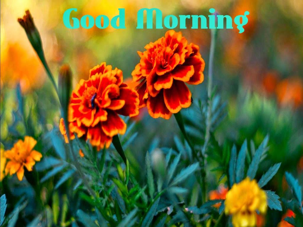 صور صباح الخير Good Morning صور مكتوب عليها صباح الخير (33)
