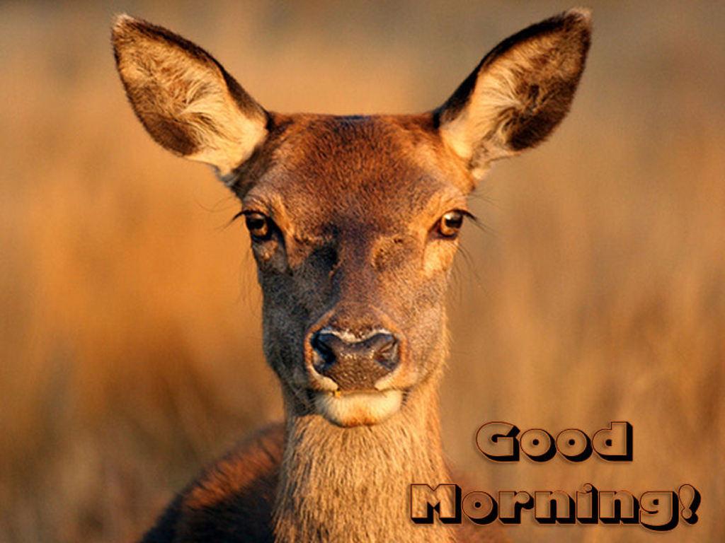 صور صباح الخير Good Morning صور مكتوب عليها صباح الخير (9)