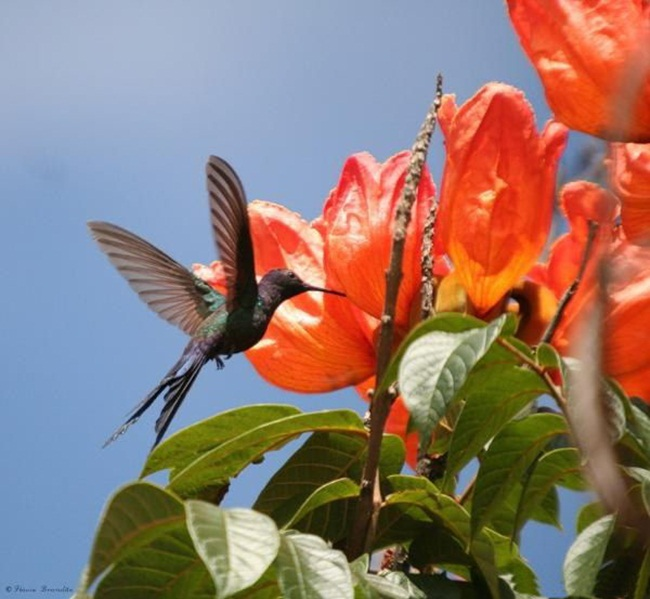 صور ورود جميلة اجمل صور الورد والازهار بجودة HD (13)