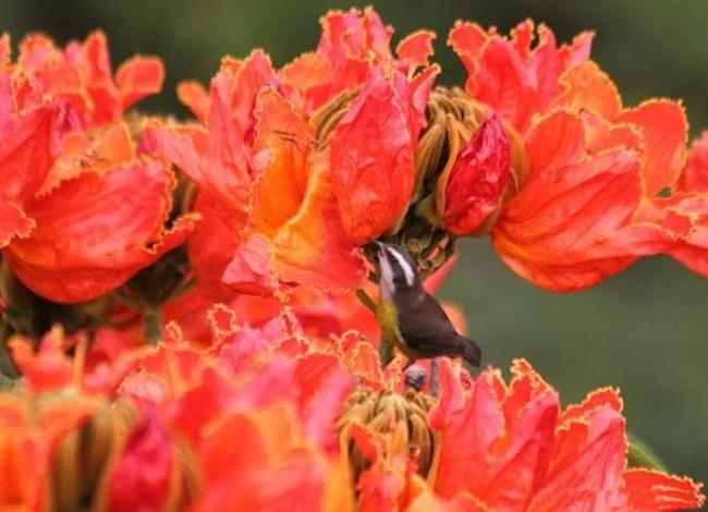 صور ورود جميلة اجمل صور الورد والازهار بجودة HD (15)