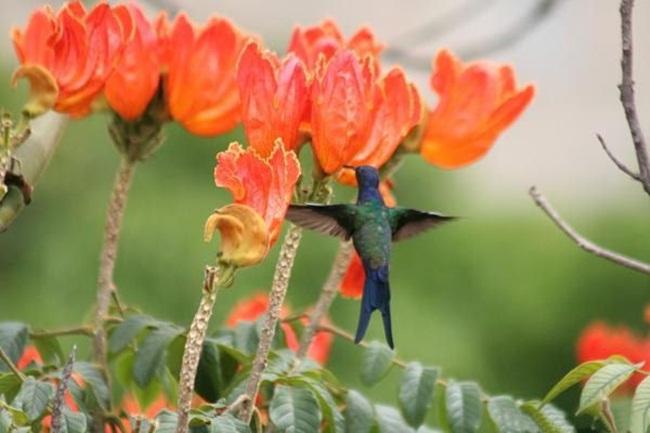 صور ورود جميلة اجمل صور الورد والازهار بجودة HD (2)