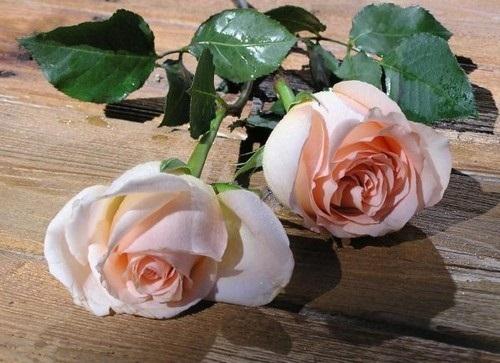 صور ورود جميلة اجمل صور الورد والازهار بجودة HD (24)