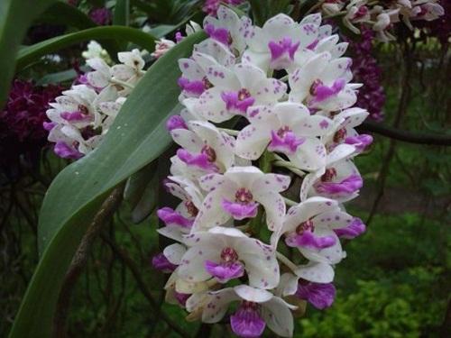 صور ورود جميلة اجمل صور الورد والازهار بجودة HD (26)