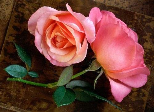صور ورود جميلة اجمل صور الورد والازهار بجودة HD (27)