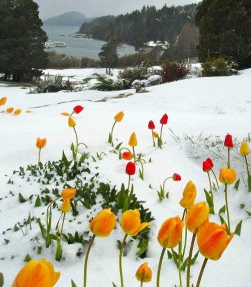 صور ورود جميلة اجمل صور الورد والازهار بجودة HD (28)