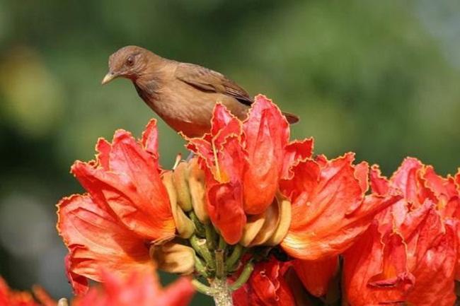 صور ورود جميلة اجمل صور الورد والازهار بجودة HD (3)