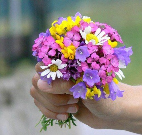 صور ورود جميلة اجمل صور الورد والازهار بجودة HD (30)