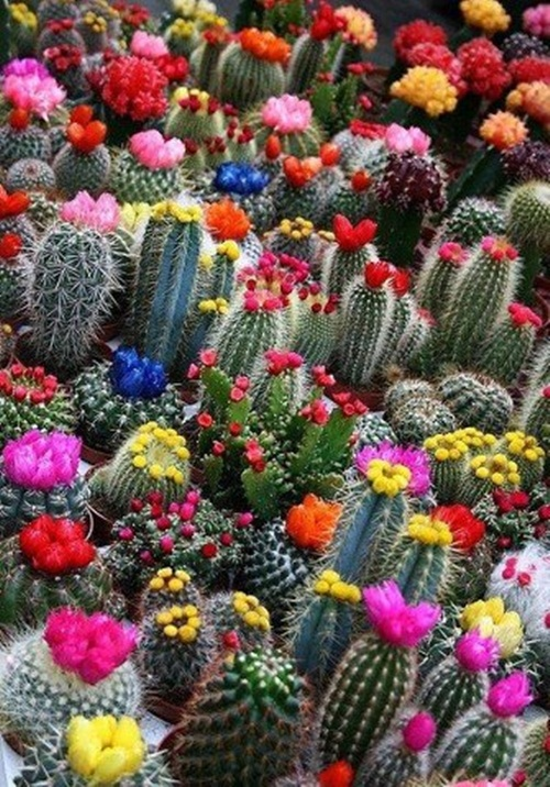 صور ورود جميلة اجمل صور الورد والازهار بجودة HD (35)