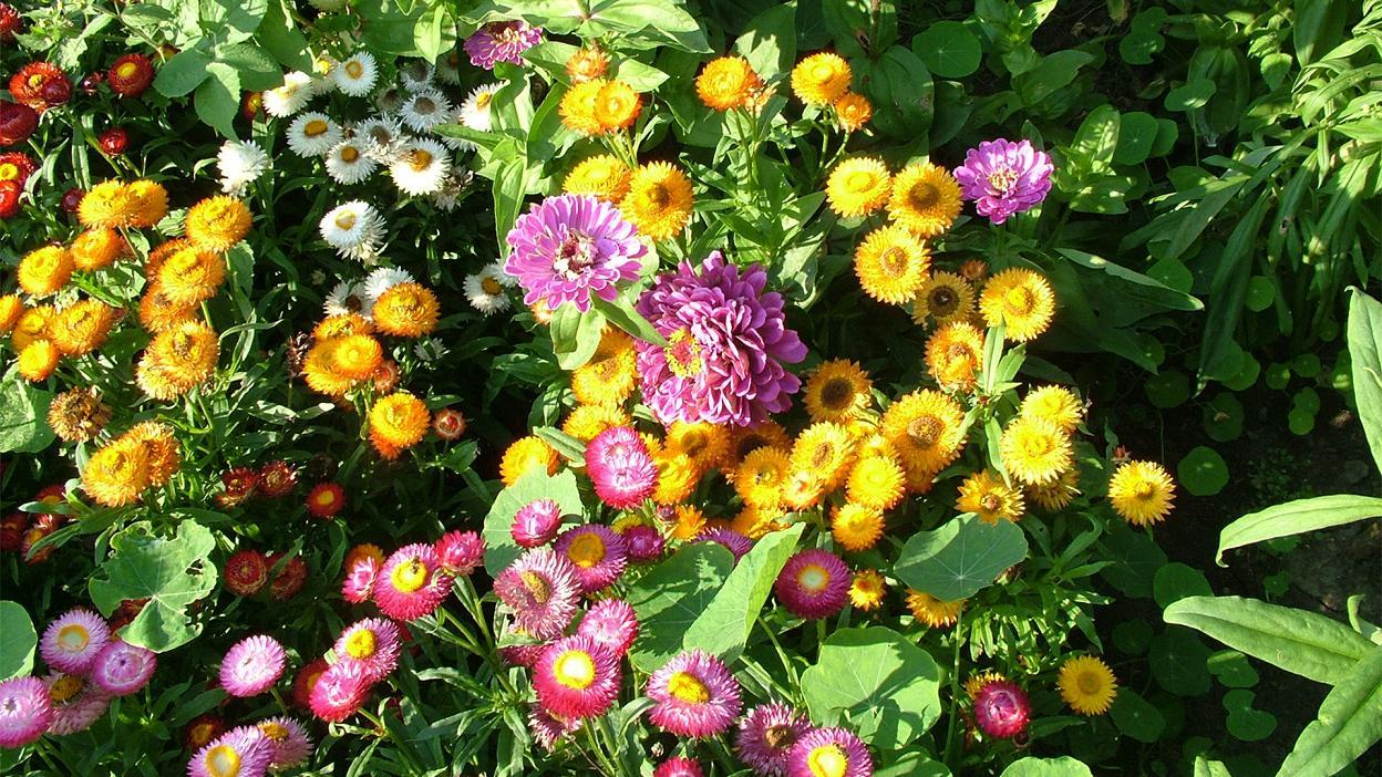 صور ورود جميلة اجمل صور الورد والازهار بجودة HD (36)