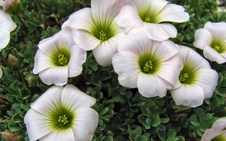 صور ورود جميلة اجمل صور الورد والازهار بجودة HD (38)