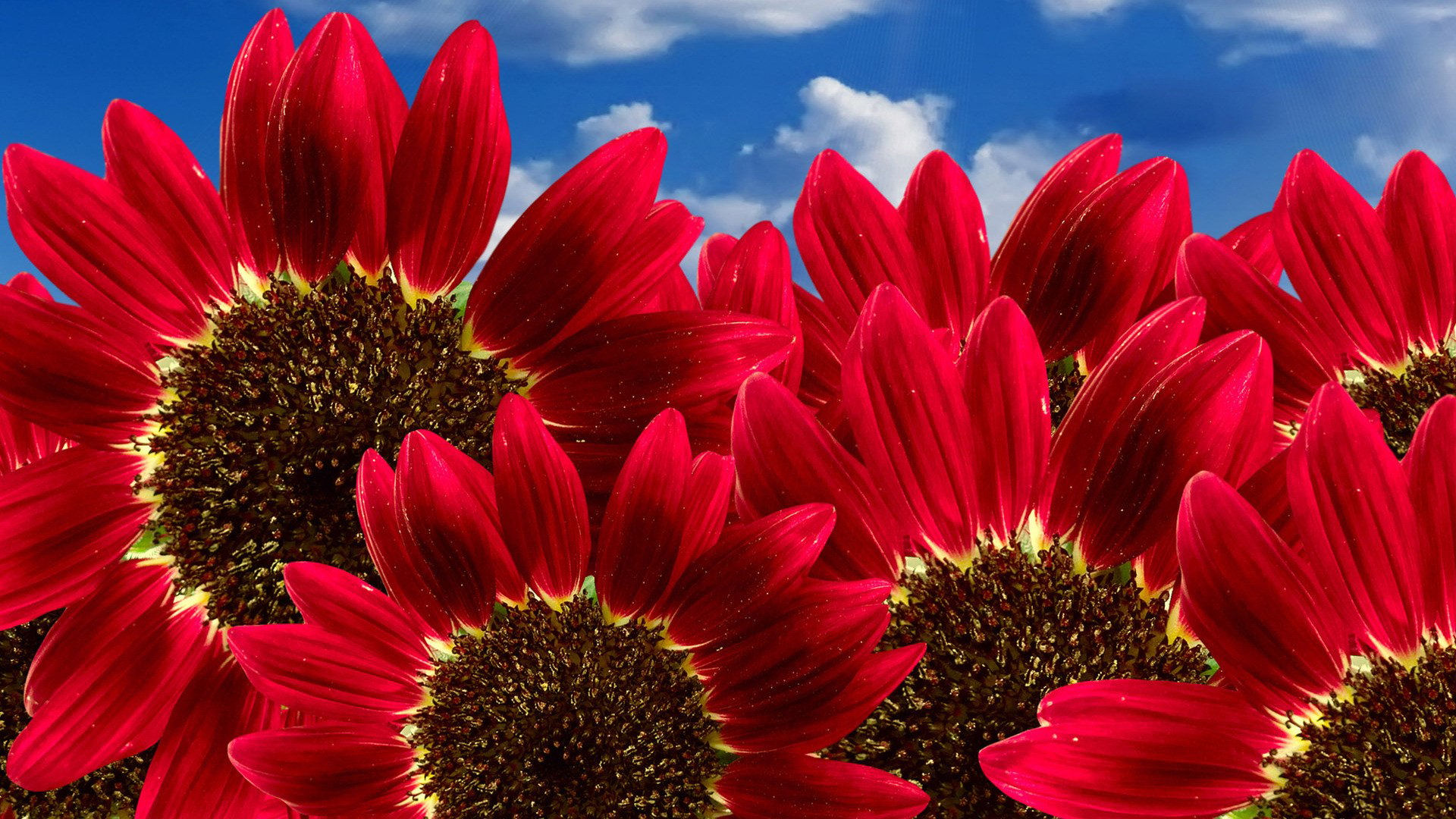 صور ورود جميلة اجمل صور الورد والازهار بجودة HD (40)