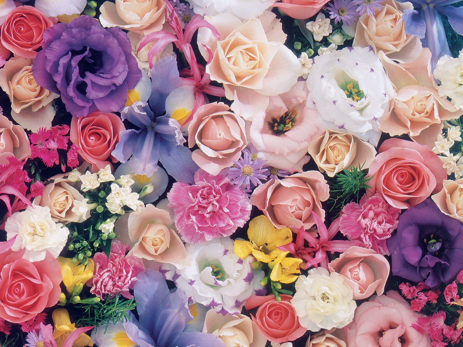 صور ورود جميلة اجمل صور الورد والازهار بجودة HD (42)